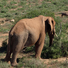 Addo Elefant Park
