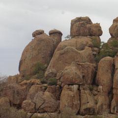 sie leben hinter diesen Felsen