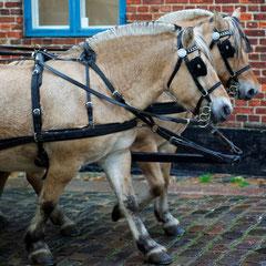 Pferderundfahrt