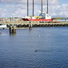 Hafenbesucher