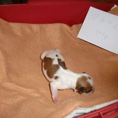 Frisch geboren