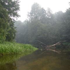 Река ниже Судогды