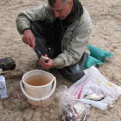 Утром седьмого дня Игорь готовит рыбу для засолки
