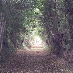 Baumtunnel zum Steinkreis