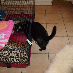 abri et gamelle pour chat dehors  Image