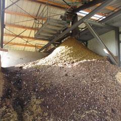 Compost à 35 % d'humidité