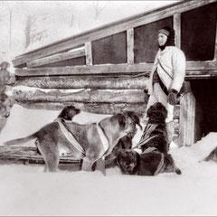 Anticosti, au début du siècle; attelage de chien.