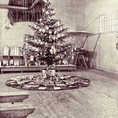 Arbre de Noël, baie Ste-Claire, 1901