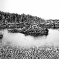 Hutte de castor sur le lac St-Georges