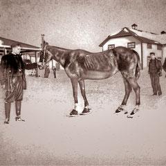 Léo Picard, directeur de la ferme de Baie Ste-Claire voulait savoir si  le cheval «Soldat» pouvait marcher sur la neige avec des raquettes (en métal), comme l'homme. Celles-ci probablement fabriquées par le forgeron du village Tommy Lessard.