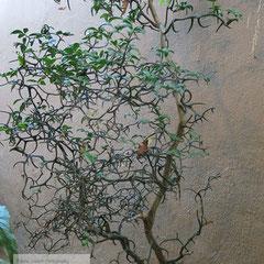 Travel Photography aus Frankreich - Szenerie eines kleinen Baumes vor einer trostlosen Wand.