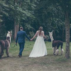 Das Brautpaar spaziert mit zwei Lamas durch den Park des Schloss Philippsruhe in Hanau.