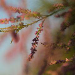 Nahaufnahme einer Pflanze in Hanau - anaologes Foto mit der Rolleiflex SL 66