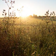 Sonnenaufgang auf Mallorca über den Feldern. Aufnahme vom Street und Travel Fotograf Roland Grosch aus Hanau.
