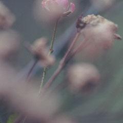Nahaufnahme von Blumen als Stilleben Fotografie von Roland Grosch