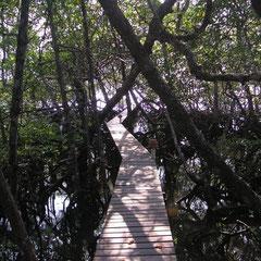 Passarela particular - Privatsteg durch die Mangroven - Privat Gangway through the mangies