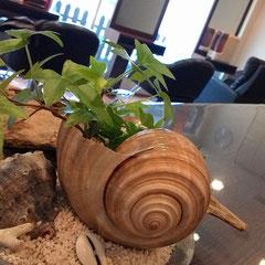 貝の植木鉢 横