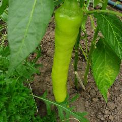 Bullhorn Chili