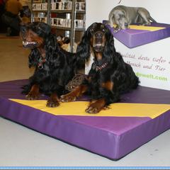 Medizinische gesunde Hundekissen Lectus pro canibus beugen Gelenksbeschwerden und  Muskelverspannungen vor