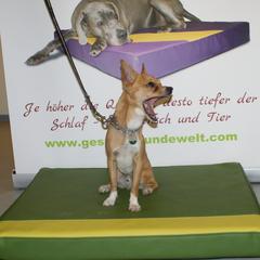 Hundebetten Lectus pro canibus sind druckausgleichend und wohltuend für jede Rasse