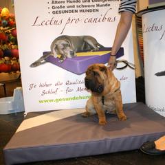 Medizinische Hundebetten mit Viskoschaum vom Welpenalter verhindern und reduzieren die Bildung von Liegeschwielen an den Gelenken