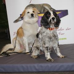 orthopädische Hundekissen lectus pro canibus® sind mit hochwertigem Kunstleder bezogen. Unser Kunstleder ist Speichel- und Urinbeständig, Hautverträglich, Frei von FCKW und Formaldehyd und in vielen Farben erhältlich