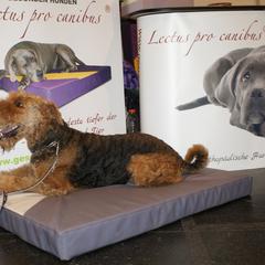 Lectus pro canibus - gesundheitsfördernde orthopädische Hundeschlafplätze aus eigener Werkstätte aus dem Hause Gesunde Hundewelt