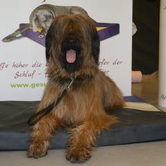 Lectus pro canibus Hundebetten aus Kunstleder sind Speichel- und Urinbeständig, hautverträglich, frei von FCKW und Formaldehyd und in vielen Farben erhältlich
