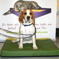 Lectus pro canibus Hundebetten werden einzeln in Handarbeit hergestellt