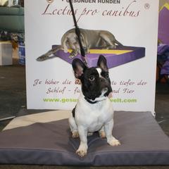 Lectus pro canibus medLine Hundekissen aus dem Hause gesunde Hundewelt - handgefertigt und in Wunschfarben und Wunschgrößen lieferbar