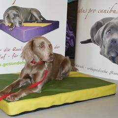 Medizinisches Hundebett lectus pro canibus von Gesunde Hundewelt für extreme Druckentlastung und beste Körper Unterstützung