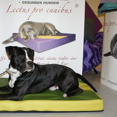 Weiche Kunstleder Hundebetten mit Visko von Lectus