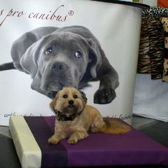 Mala und die lila Hundebettchen Lectus pro canibus® von Gesunde Hundewelt