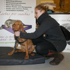 Lectus pro canibus Hundebetten werden einzeln auf Gewicht, Farbe und Größe angepasst