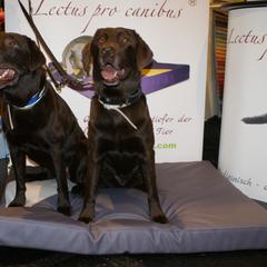 Lectus pro canibus Hundebetten aus medizinischem Viskoschaum sind optimal auf das Gewicht des Hundes ausgerichtet