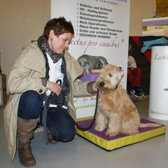 Lectus pro canibus Hundekissen - hochwertige gesundheitsfördernde Hundeschlafplätze aus eigener Werkstätte