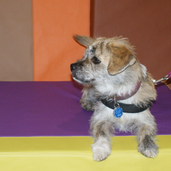 Die farbenfrohe Welt der orthopädischen Hundebetten Lectus pro canibus® - jedes orthopädische Hundekissen wird einzeln in Handarbeit hergestellt, Größe und Farbe auch nach Wunsch möglich d