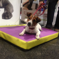 Orthopädische Viskoschäume in stylischen Bezügen abgestimmt auf das Körpergewicht auch für unsere Kleinen!  Gesunde Hundewelt mit dem medizinischen Hundebetten und Schlafzubehör Programm auf der Internationalen Hundeausstellung Graz 2013