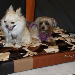 orthopädisches Hundekissen Lectus pro canibus® aus dem Hause Gesunde Hundewelt gibt es auch in extra kleinen Größen für unsere kleinsten Hunderassen wie Chihuahuas