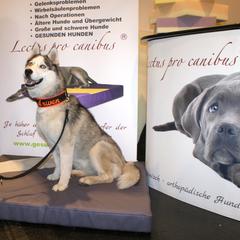 Orthopädische XXL-Hundekissen, orthopädische Hundekissen, orthopädische Hundebetten für kleine u. große Hunde aus unserer Manufaktur