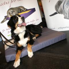 Orthopädische Hundebetten Lectus pro canibus sind ideal zur Unterstützung der Genesung nach Operationen