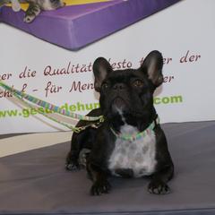 medizinische Hundekissen Lectus pro canibus® wurden gemeinsam mit Tierärzten, Pflegern und Züchtern entwickelt und garantieren einen erholsamen und schmerzfreien Hundeschlaf