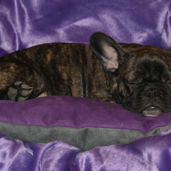 Lectus pro canibus von Gesunde Hundewelt lädt zum Schlafen ein!