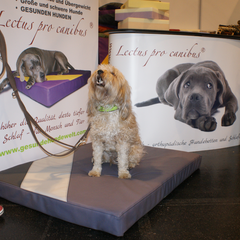 Medizinische Hundebetten Lectus pro canibus aus dem Hause Gesunde Hundewelt zur Unterstützung der Wirbelsäule