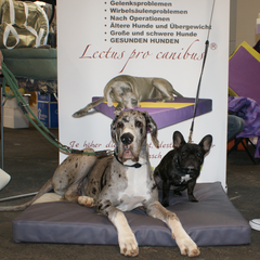 orthopädische Hundebetten Lectus pro canibus aus dem Hause gesunde Hundewelt für alle Hunderassen in Größe S bis zum XXL Hundebett