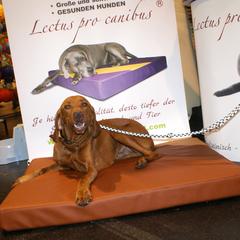 Orthopädische Hundematten Lectus pro canibus unterstützen die Gesundheit des Bewegungsapparates und lindern Schmerzen