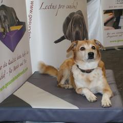 Arthrose - Betten für Hunde zur Schmerzlinderung und Druckentlastung Lectus pro canibus®