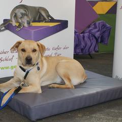orthopädische Hundekissen Lectus pro canibus® aus dem Hause Gesunde Hundewelt unterstützen bei Arthritis und Arthrose, HD- Hüftdysplasie, Gelenksproblemen, Wirbelsäulenproblemen und nach Operationen