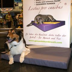 Arthrose und Arthritis bei Hunden kann durch Schlafen auf medizinischen Hundebetten schmerzlindernd gestaltet werden