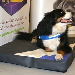 Lectus pro canibus Hundeliegen erfolgreich im Einsatz nach Operationen, älteren Hunden, übergewichtigen Hunden und bei allen gesunden Hunden als Gesundheitsvorsorge